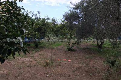 قطعه ارض بالنصيرات منطقه السوارحه للبيع