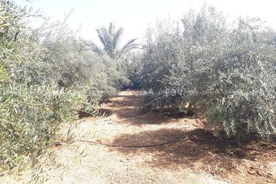 قطعة أرض مع بناء شرق دير البلح