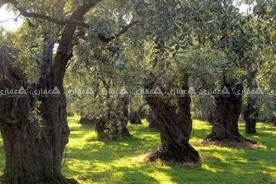 ارض للبيع ( 70 الف دينار )  - طابو -منطقة  بيت فوريك